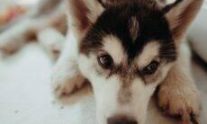 Seu cão tem crises de vômito? Saiba por que isso acontece e o que fazer