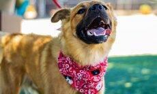 Nova plataforma facilita a adoção segura de cães e gatos