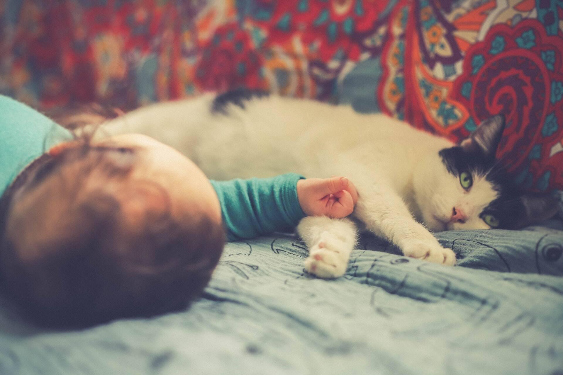 Saiba como apresentar um novo membro da família para o seu gato