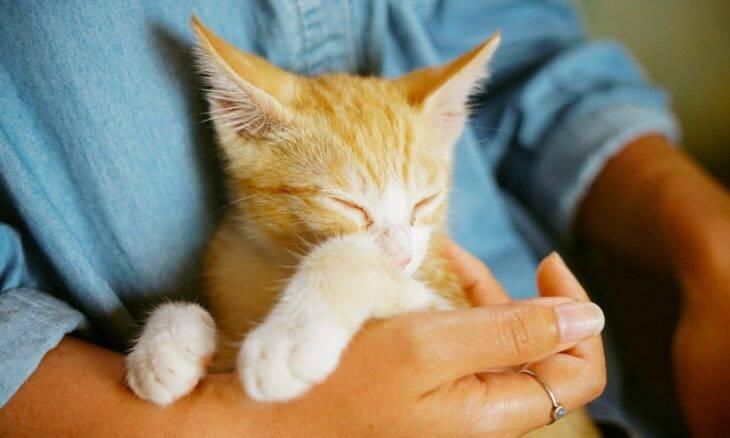 Carregue seu gato como um profissional e evite riscos para ele e arranhões em você