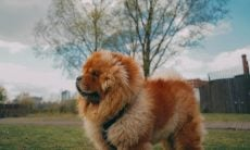 Conheça as dez raças de cães mais difíceis de treinar