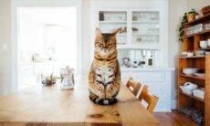 Meu gato esconde comida pela casa toda. Devo me preocupar?