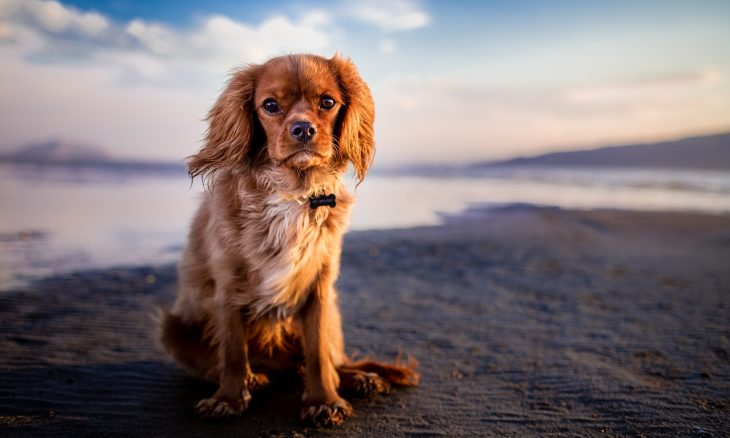 Confira dicas de especialistas para proteger seu pet durante o verão