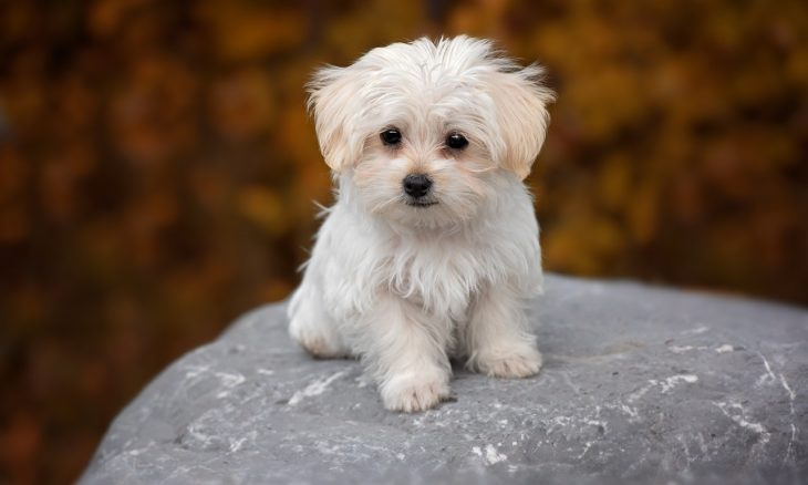 Sofre com alergia? Veja as dez raças de cães que causam menos reações