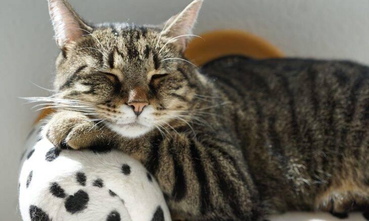 Suspeita que o seu gato esteja resfriado? Veja o que os veterinários têm a dizer