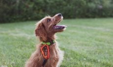 Estudo revela o jeito certo de treinar seu cão