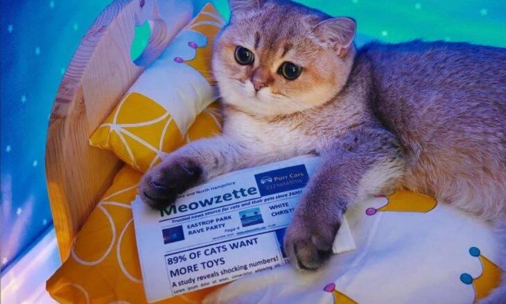 Aconchego: Fotógrafa monta quartos em miniatura para o seu gato