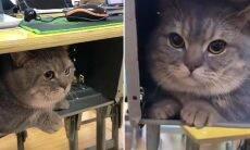 Gato tira 10 em comportamento ao acompanhar universitária nas aulas