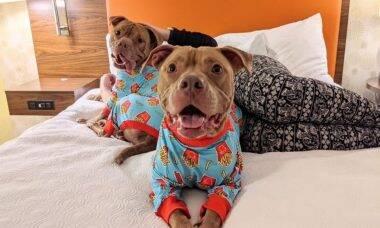 Fofura: Abrigo coloca pijamas em cães para estimular adoção