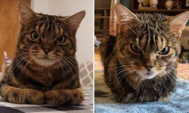 Conheça o gato com cara de enfezado, mas que é um doce por dentro
