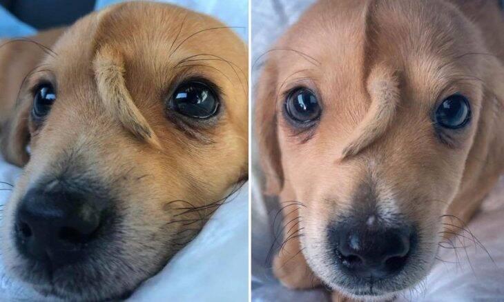 Conheça Narwhal, o cãozinho unicórnio