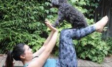Vídeo: 10 maneiras de usar seu cão como parceiro de treino