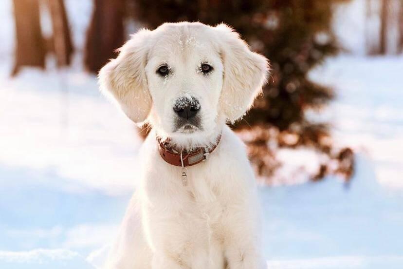 Instagram: Veja quais foram as 10 raças de cães mais fotografadas em 2020