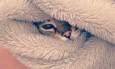 Viralizou: Donos compartilham fotos de filhotes de gato embrulhados em toalhas