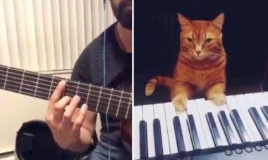 Vídeo: Guitarrista faz dueto com gato pianista e viraliza na internet