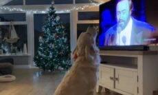 Em vídeo hilário, cão se junta aos Três Tenores para interpretar canção natalina