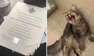 Gato bomba nas redes após comer diploma universitário do dono