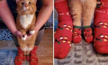 Ficou fora do ar no Natal? Veja os 10 tuítes de cães e gatos mais divertidos
