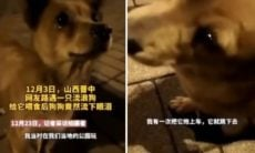 Vídeo comovente: cão 'chora' ao receber comida de estranho