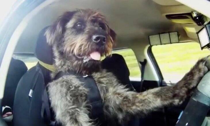 Após bater o carro, mulher não faz bafômetro e alega que cachorro dirigia o veículo
