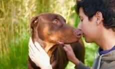 Está precisando de um amor de verdade? Adote um cão, diz estudo