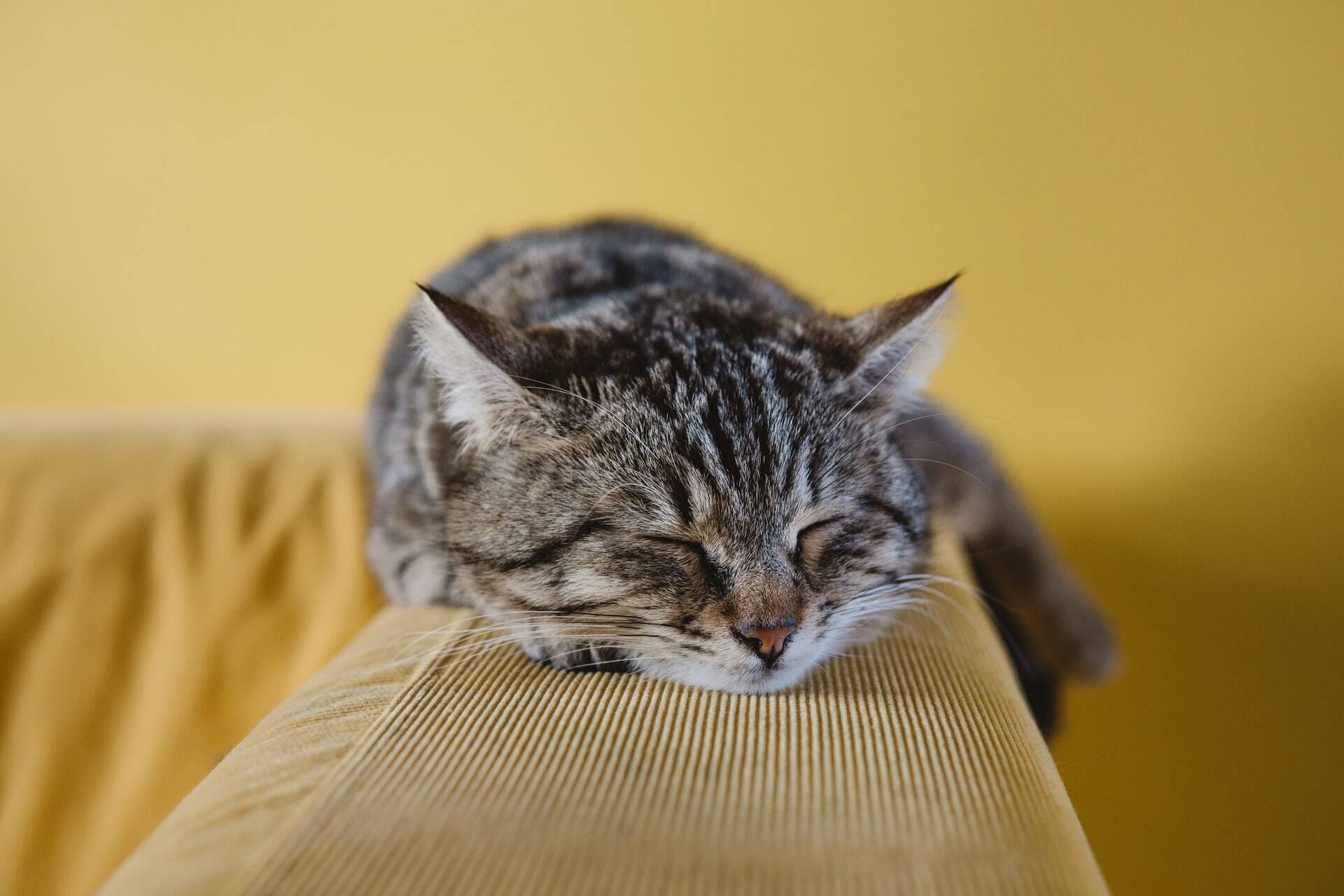Confira comportamentos do gato que podem indicar problemas de saúde