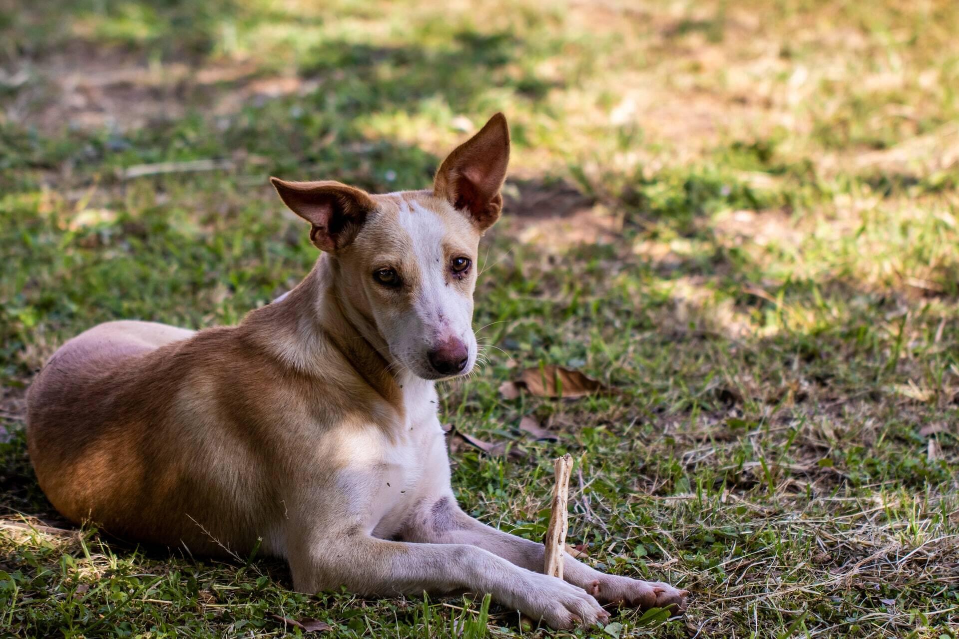 Humanos estão decepando patas de cães e gatos, e veterinária suspeita de magia negra