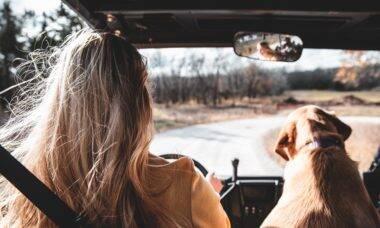 6 dicas para viajar de carro com seu pet