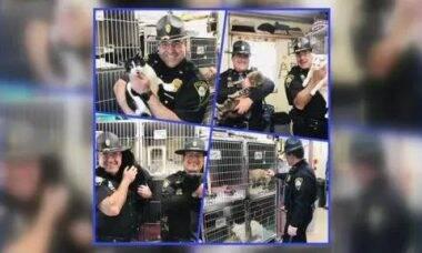 Policiais posam com gatos para estimular adoção nos EUA