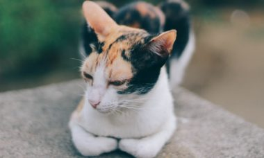 Gato que teria morrido durante deslizamento de terra em 2018 reaparece vivo