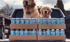 Cães da raça golden retriever fazem delivery de cerveja durante a pandemia