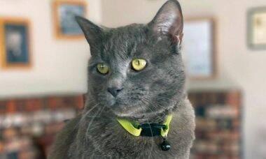 Tribunal adota gato terapeuta para acalmar testemunhas de crimes violentos