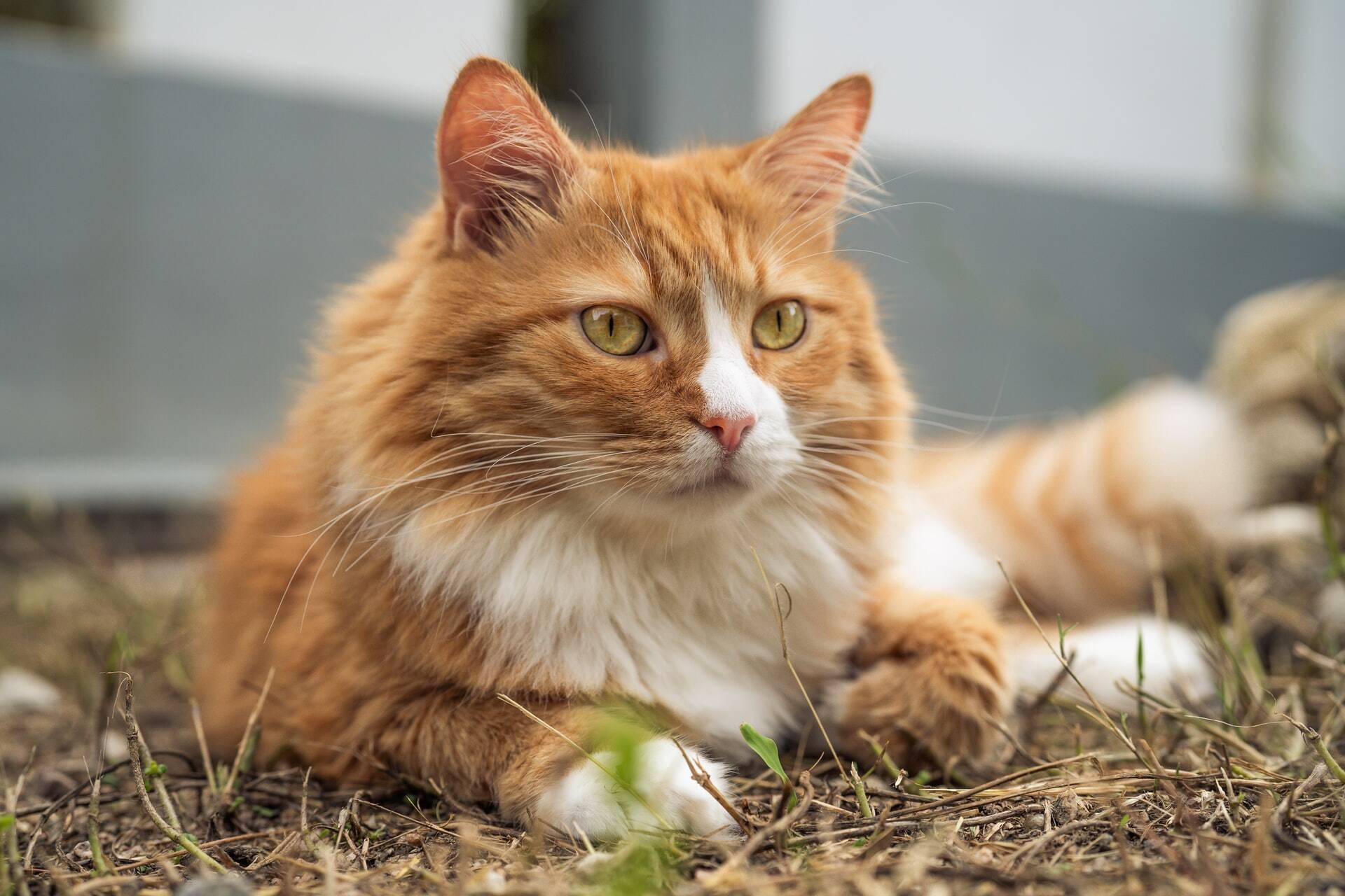 Gato reaparece após 6 anos e conforta a dona, que enfrenta a Covid-19
