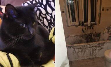 Coberto de óleo, gato 'decora' a casa com arte abstrata