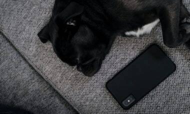 Esses 10 aplicativos vão fazer de você um dono de cão melhor em 2021