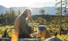 Estudo revela as 5 palavras que os cães mais gostam de ouvir... em inglês