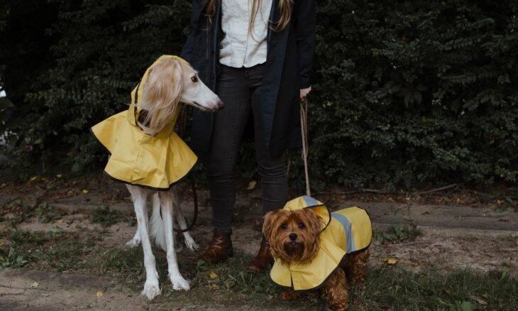 Tudo o que você precisa saber para sair com seu cão na chuva