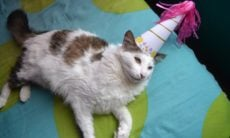 Festa de aniversário para um gato infecta 15 pessoas com Covid-19