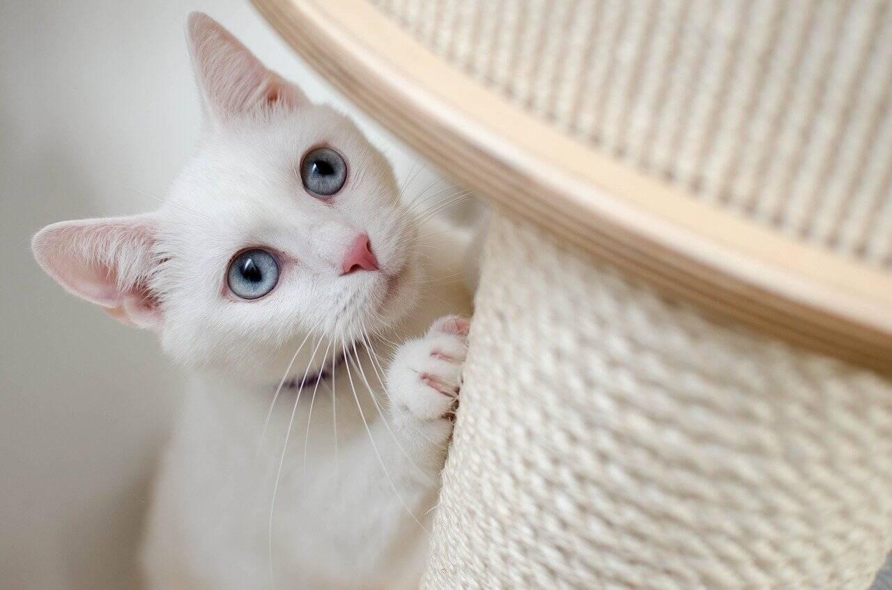 Saiba como fazer seu gato parar de arranhar móveis e espalhar pelos pela casa