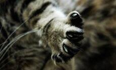 Saiba como cuidar das unhas do seu gato do jeito certo