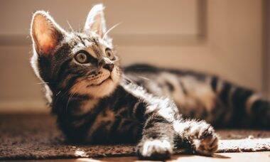 Saiba como ensinar o seu gato a usar a caixa de areia corretamente