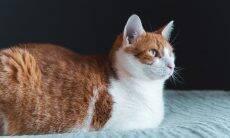 Gatos são tratados como pets de segunda classe? Donos dizem que sim, aponta estudo
