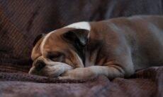 Por que alguns cães e gatos andam em círculos antes de deitar?