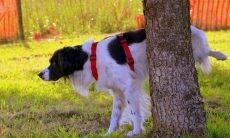 Saiba como ensinar o seu cão a fazer as necessidades no lugar certo em um apartamento
