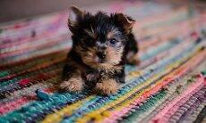 6 dicas para criar um filhote de cachorro do jeito certo, segundo a ciência
