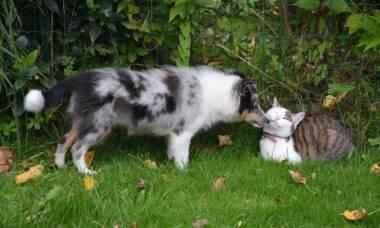 6 dicas ajudam a apresentar um cão para um gato com segurança