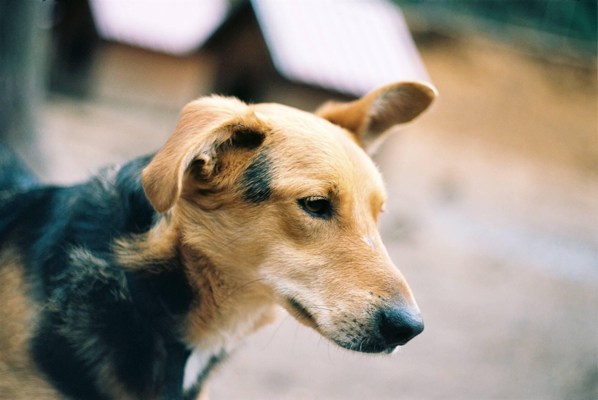Saiba o que fazer caso o seu cão tenha o hábito de comer fezes