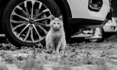 Entenda por que tem gente culpando Elon Musk e a Tesla pela morte de gatos