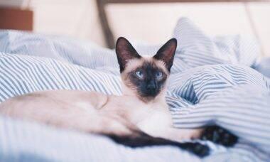 Seu gato faz cocô e xixi fora da caixa? Entenda as razões e dê um jeito nisso
