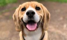 Tudo o que você precisa saber para ter certeza de que seu cão está saudável